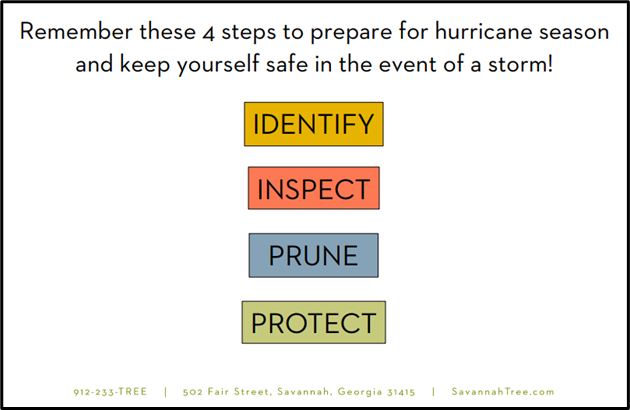 Hurricane Prep For Your Trees!